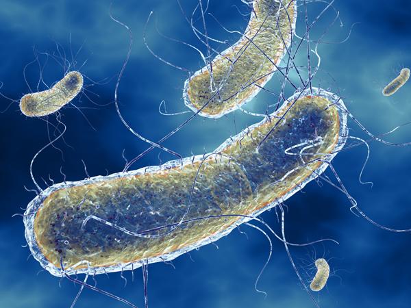 Эшерихия, эшерихиоз (escherichia coli) - возбудитель и его патогенность, лечение