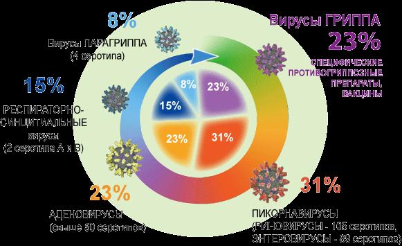 ОРЗ и ОРВИ: понятие, развитие и возбудители, симптомы и течение, лечение, профилактика